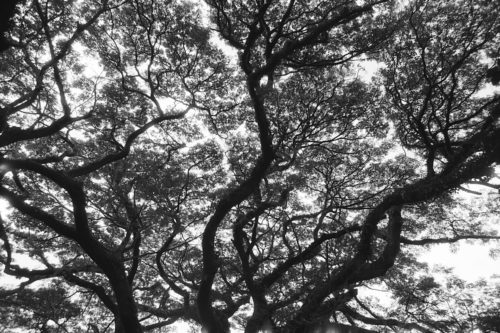 christian-maillard-arbres-1